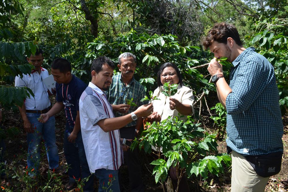 Hier schaut er sich gemeinsam mit Tati Büsing-Kock und dem Leiter der Kaffee-Kooperative Bapak Yursiwan (weißes Hemd) die Kaffeepflanzen zwischen Chilis an
